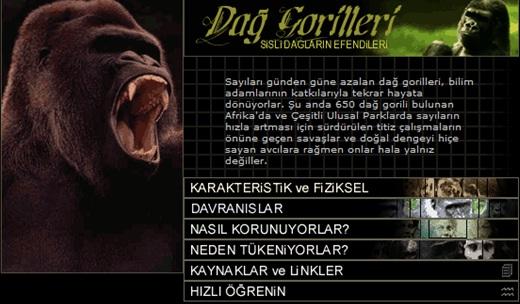 Sisli Dağların Efendileri - Dağ Gorilleri - Reha Başoğul - Araştırma