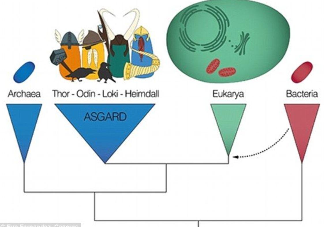 Mikropların En Çok Bulunduğu Ortak Alanlar